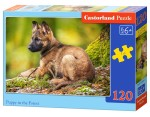 Puzzle Castor 60 - Rafa coralowa, On the Coral Reef