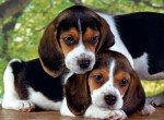Puzzle Castor 2000 - Mapa świata z 1639, Map of the world, 1639